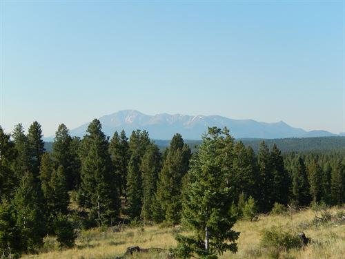 National Forest Co 109 Ac & 3 Ponds : Woodland Park : Teller County : Colorado