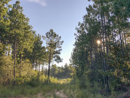 11 Acres Tevis : Livingston : Polk County : Texas