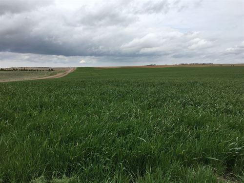 Cheyenne County Farm And Grass : Dalton : Cheyenne County : Nebraska