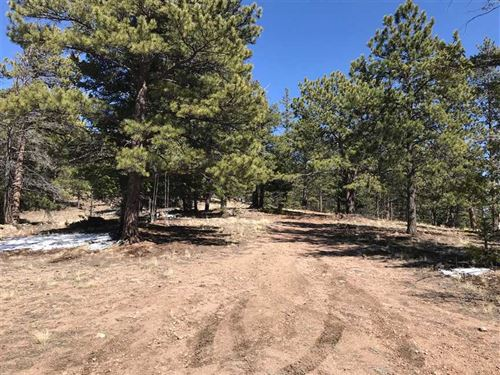 Pike Forest Inholding : Florissant : Park County : Colorado