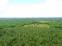 Planted In Loblolly Pines : Mountain Rest : Oconee County : South Carolina
