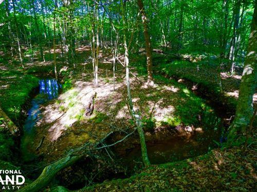 Kerr Lake Timber And Hunting Land : Henderson : Vance County : North Carolina