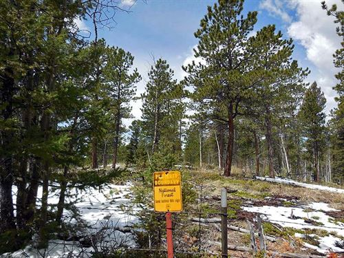 Borders National Forest : Divide : Teller County : Colorado