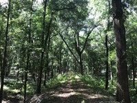Beautiful Rolling Pasture : High Springs : Alachua County : Florida