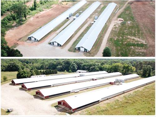 Sugar Creek Farms : Madison : Morgan County : Georgia