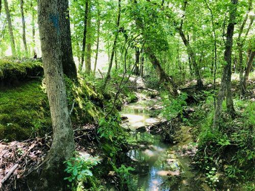 Creeks, Campsite, & Hunting : Sparta : Hancock County : Georgia