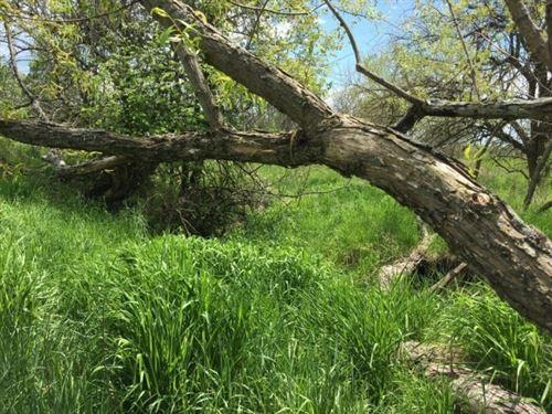 218 Acres Row Crop, Hunting : Milan : Sullivan County : Missouri