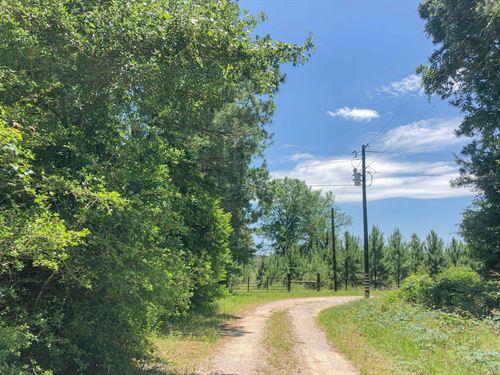 323 Acres Copeland Road Tract 5 : Huntsville : Walker County : Texas