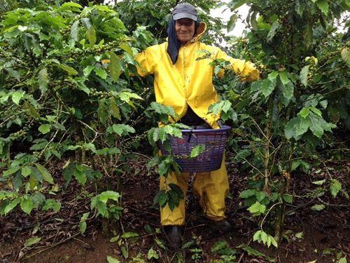 530 Acre Coffee Farm In Production : La Suiza De Turrialba : Costa Rica