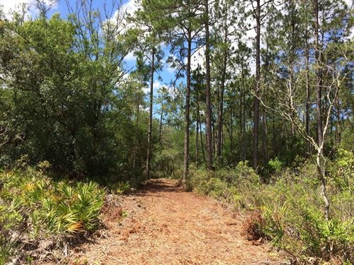 Owner Financing 50 Ac, Spring Lake : Brooksville : Hernando County : Florida