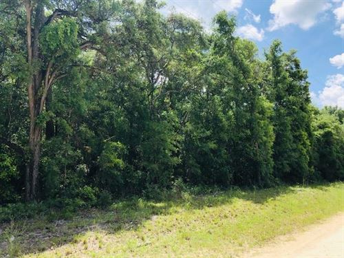 5 Acres, Hardwoods 777877 : Chiefland : Levy County : Florida