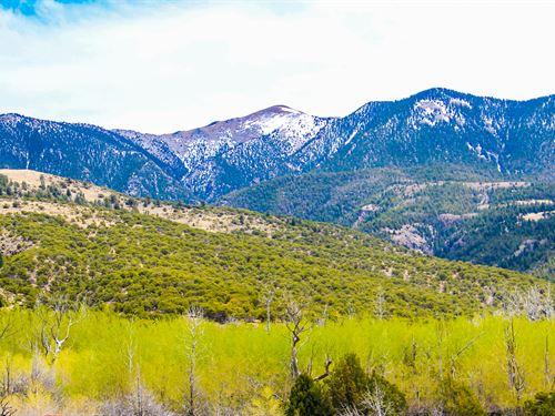 47 Acre Wooded Hunt Land Near River : Model : Las Animas County : Colorado