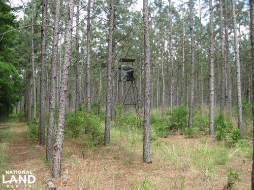 Calks Ferry Road Fairview Timber an : Leesville : Lexington County : South Carolina