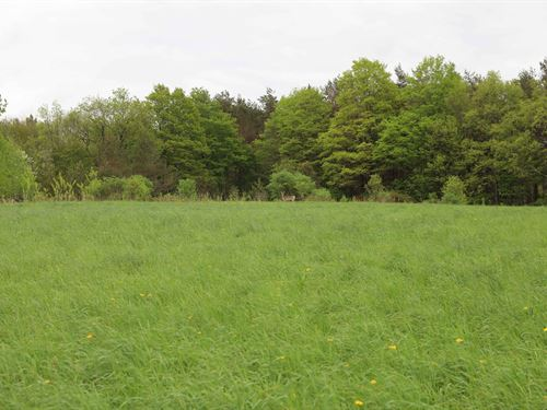 Scenic Catskills Wooded Acreage : Franklin : Delaware County : New York