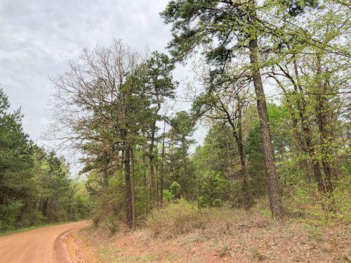 483 Acres Cr 2864 Tract 1017 : Hughes Springs : Cass County : Texas