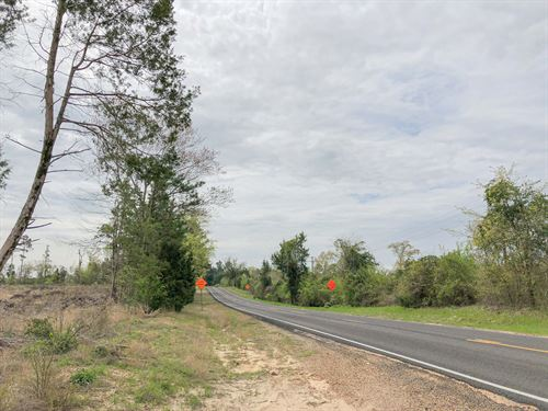 87 Acres Fm 1399 Tract 1016 : Linden : Cass County : Texas