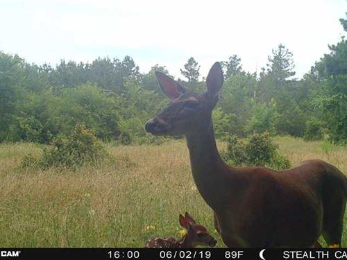Off Grid Recreational Hunting Oasi : Rattan : Pushmataha County : Oklahoma