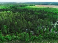 Black Creek Farm : Darlington : Darlington County : South Carolina