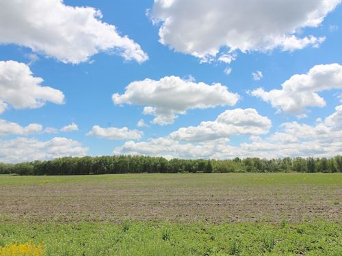 Burton City Rd, 60 Acres : Orrville : Wayne County : Ohio