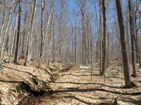 Kelly Brook Forest : Moretown : Washington County : Vermont