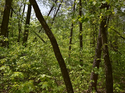 Timber Galore : Altamont : Grundy County : Tennessee