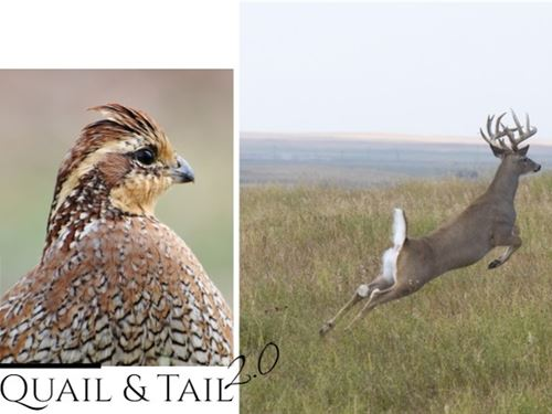 Quail & Tail Ii : Haven : Reno County : Kansas
