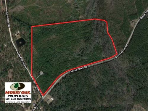 50 Acres of Hunting Land For Sale : Grantsboro : Pamlico County : North Carolina