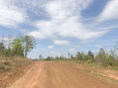 36 Acres Fm 3129 Tract 1007 : Queen City : Cass County : Texas