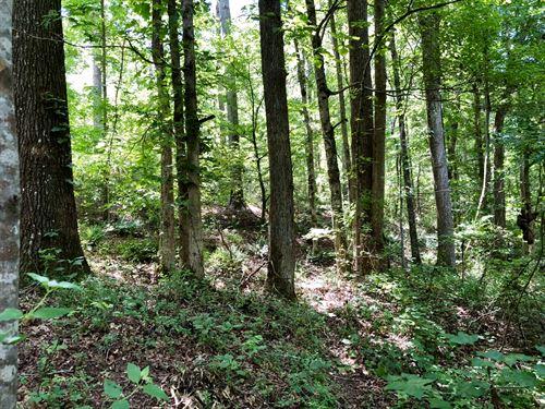 Hardwood Timber / Great Hunting : Heflin : Cleburne County : Alabama