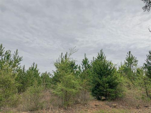 122 Acres Cr 2358 Tract 1010 : Linden : Cass County : Texas