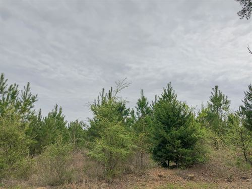 98 Acres Fm 1399 Tract 1010 : Linden : Cass County : Texas