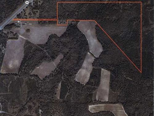 64 Acres in The Heart of Big Buck : Warwick : Worth County : Georgia