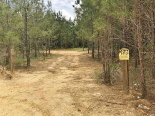 44 Acres Hunting Land For Sale : Booneville : Prentiss County : Mississippi