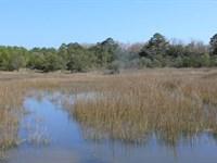 Toogoodoo Farm 5+ Acre Homesite : Meggett : Charleston County : South Carolina
