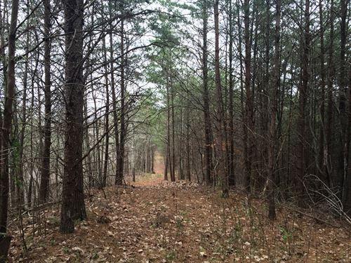 Sumac Ridge Tract : Cisco : Murray County : Georgia