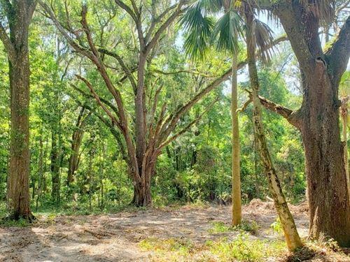 Orange Acres 34 Acres : Citra : Marion County : Florida