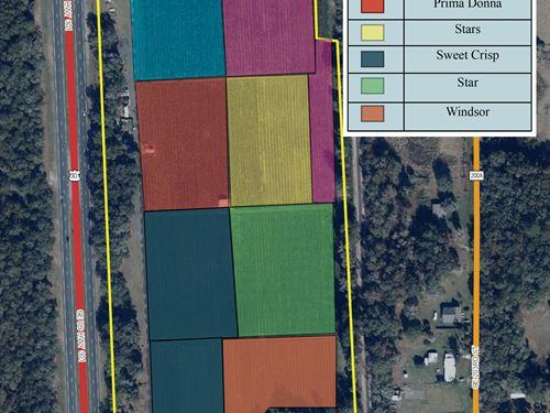 Aunt Zelma's Blueberry Farm : Island Grove : Alachua County : Florida