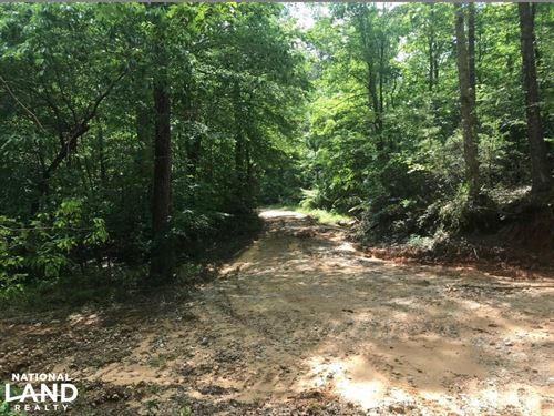 County Road 208 Eutaw Hunting Tract : Eutaw : Greene County : Alabama