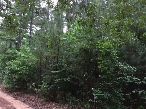 Pine Timber Land Ouachita County : Chidester : Ouachita County : Arkansas
