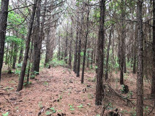 Planted Pine / W Hardwood Creek : Emmet : Nevada County : Arkansas