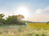 Cedar Hilltop, Pristine Pastures : Oakwood : Freestone County : Texas