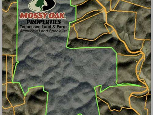 1,012 Timberland Acres in Jackson : Whitleyville : Jackson County : Tennessee