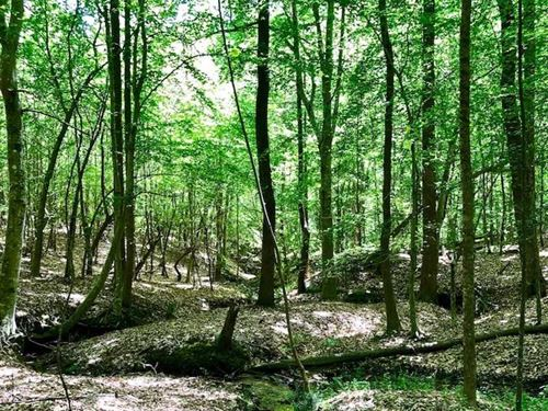 7 Acres of Timber Land in For Sale : Kittrell : Vance County : North Carolina