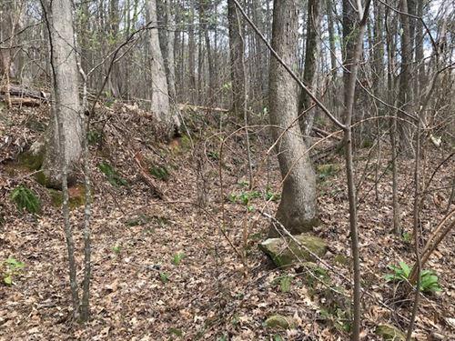 47 Acres Near I-59 : Springville : Jefferson County : Alabama