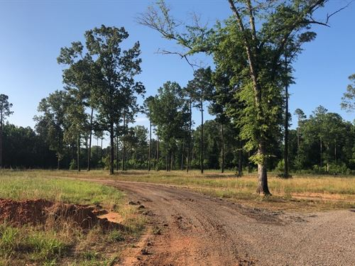 Dallas County, Bogue Chitto Tract : Marion Junction : Dallas County : Alabama