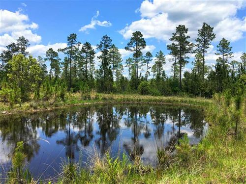 26.75 Acres With a Pond For Sale : Folkston : Charlton County : Georgia