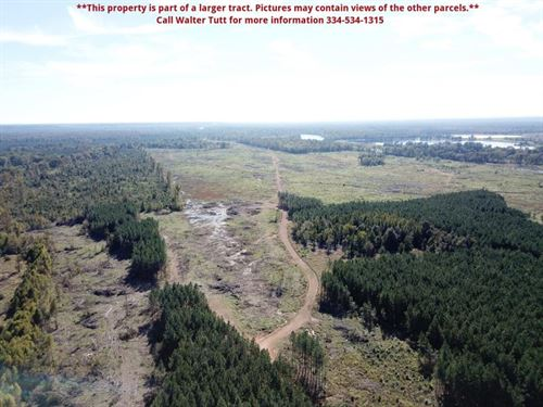 Myrtlewood Tract, Parcel C : Myrtlewood : Marengo County : Alabama