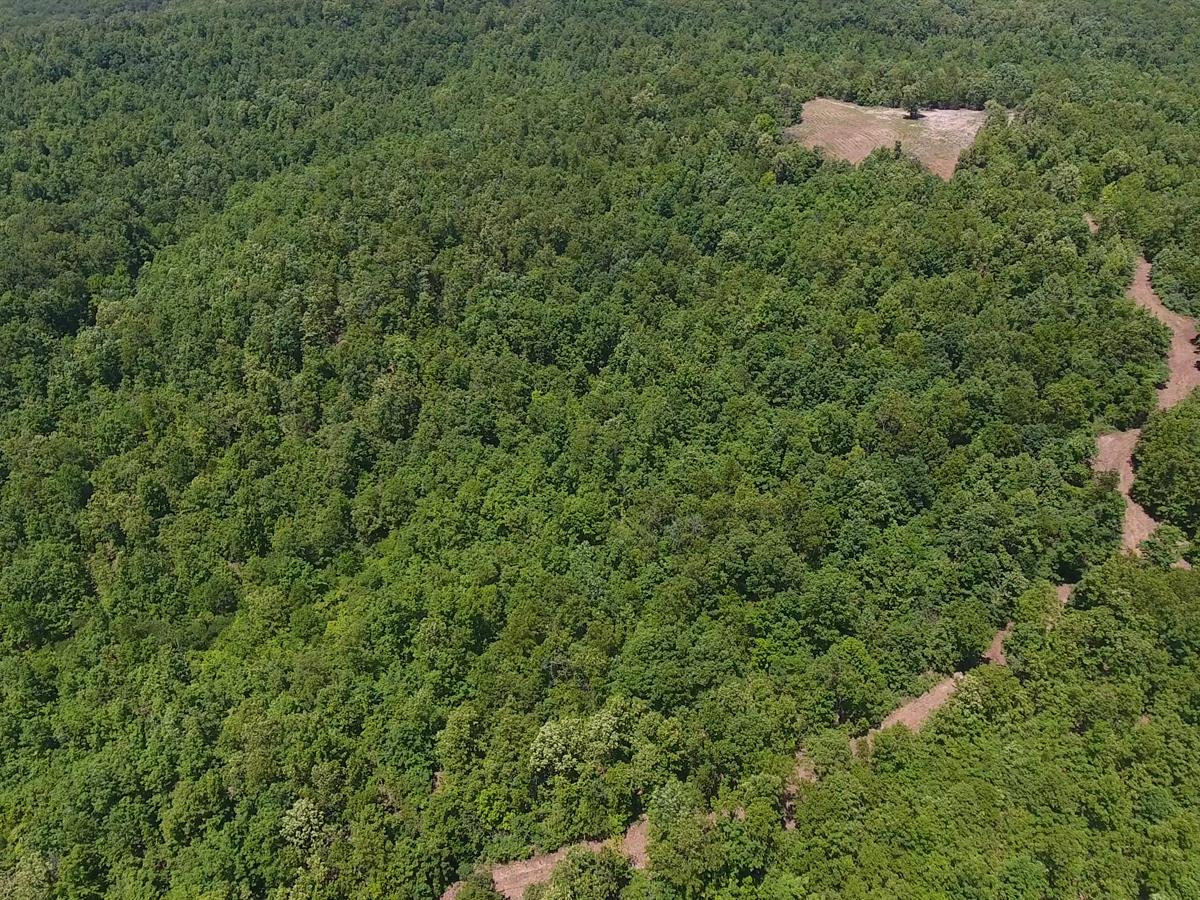 Hunting Land For Sale In Mo : Farm for Sale : Willow Springs : Texas County  : Missouri