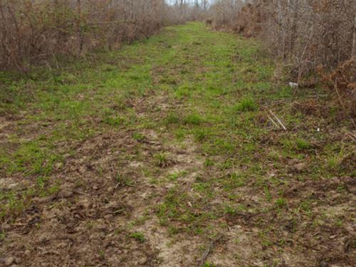 Bullpen North Tract : Wagarville : Washington County : Alabama
