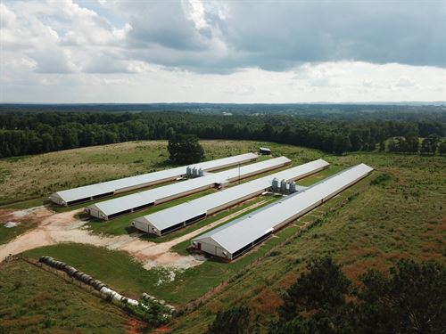 Thomas Poultry-101+/- Acre Cattle A : Ranbur : Cleburne County : Alabama